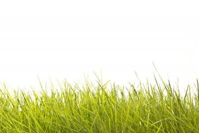 Carta da parati Leaves of Grass