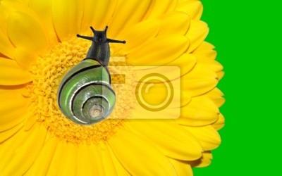 Lumaca Su Gerbera Gialla Con Fiori Brigh Neon Sfondo Verde Carta Da