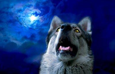 Carta da parati Lupo / lupo di notte, selezionare il fuoco sugli occhi. ritocco digitale.