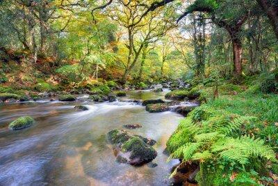 Carta da parati Magico River Forest