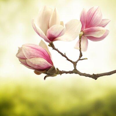 Carta da parati magnolia
