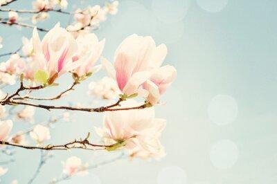 Carta da parati Magnolia fiore con un chiarore del sole. Campo profondità di profondità.