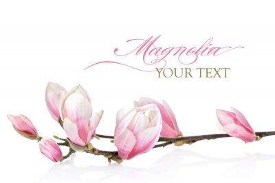Carta da parati Magnolia fiore su uno sfondo bianco