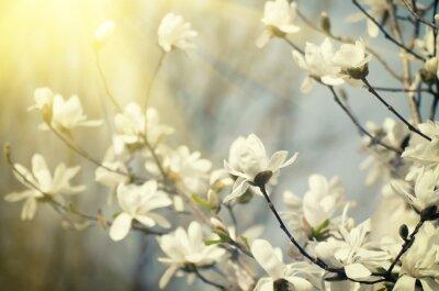 Carta da parati Magnolia fiori