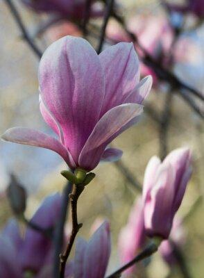 Carta da parati magnolia fleur