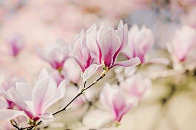 Carta da parati Magnolienblüten