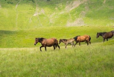 Carta da parati Mandria di cavalli a piedi lungo un prato di montagna