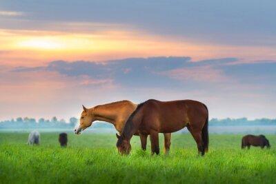 Carta da parati mandria di cavalli sul pascolo al Sunrize