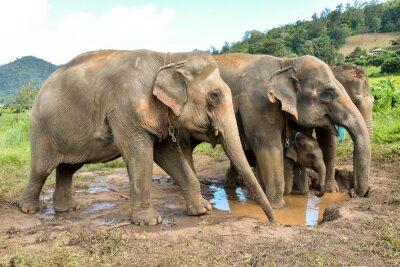 Carta da parati mandria elefante con un cucciolo di elefante in un billabong