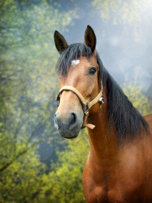 Carta da parati Marrone cavallo nel paesaggio primavera