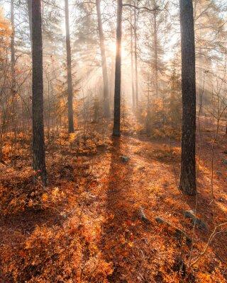 Carta da parati Mattina nebbiosa foresta luce del sole