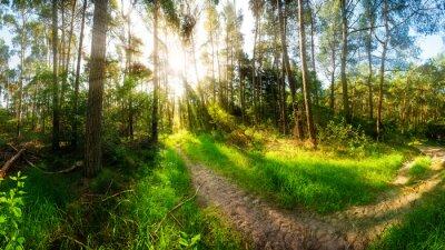 Carta da parati Mattina sole splende sul sentiero nel bosco