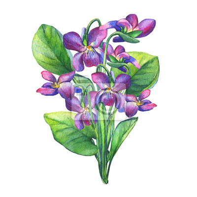 Mazzo Di Fiori Un Inglese.Mazzo Delle Viole Fragranti Fiore Selvatico Inglese Dolci Violets