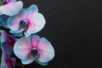 Carta da parati Mazzo di orchidee viola