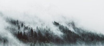 Carta da parati Moody forest landscape with fog and mist