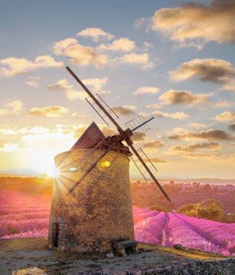 Carta da parati Mulino a vento con campo levander contro il tramonto colorato in Provenza, Francia