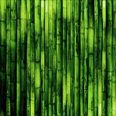 Carta da parati Muro di bambù