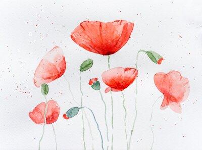 Carta da parati Natural drawing of poppy flowers