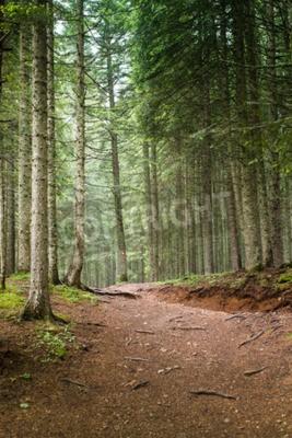 Carta da parati Naturale Spruce Tree Forest