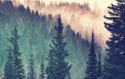 Carta da parati Nebbia nella foresta