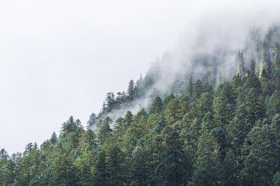 Carta da parati nebbiosa sulla Forrest in serata.