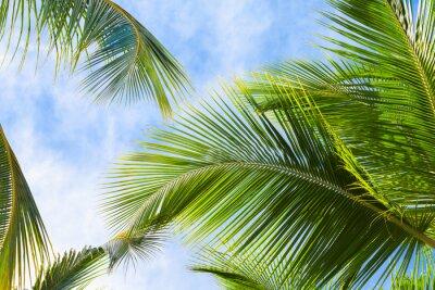 Carta da parati Noce di cocco foglie di palma
