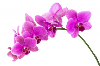 Carta da parati Orchidea