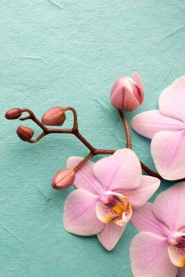 Carta da parati Orchidea.