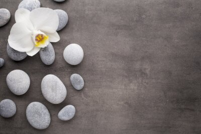 Carta da parati Orchidea bianca e pietre spa su sfondo grigio.