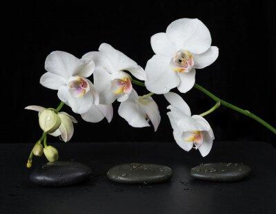 Carta da parati Orchidea bianca su sfondo nero