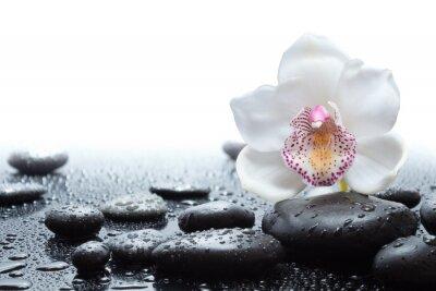 Carta da parati orchidee bianche e bagnate pietre nere