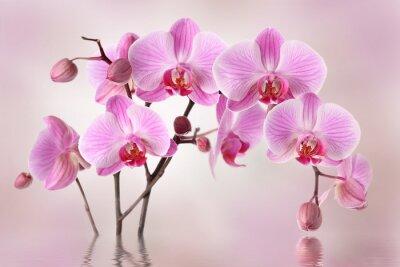 Carta da parati Orchidee rosa sfondo di fiore