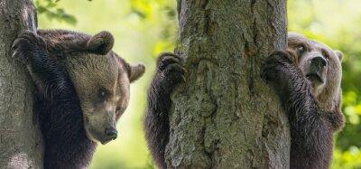 Carta da parati orsi bruni su un albero