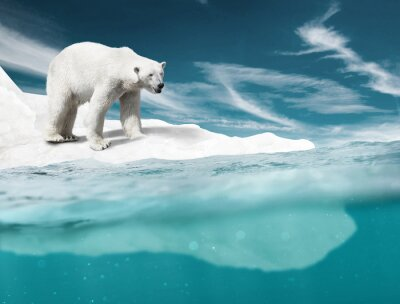 Carta da parati Orso Polare