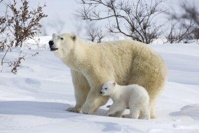 Carta da parati Orso polare con cuccioli
