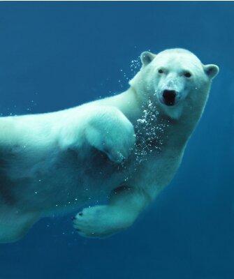 Carta da parati Orso polare sott'acqua close - up