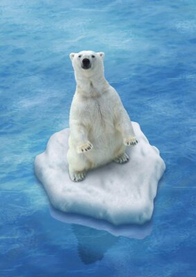 Carta da parati Ours Blanc / Fonte des glaces