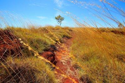 Carta da parati Outback australiano