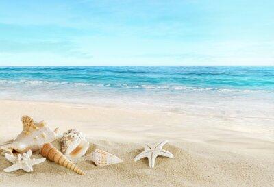 Carta da parati Paesaggio con conchiglie sulla spiaggia tropicale