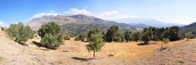 Carta da parati Paesaggio di ulivi sull'isola di Creta