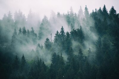 Carta da parati Paesaggio nebbioso con foresta di abete in stile retrò vintage hipster