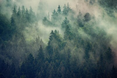 Carta da parati Paesaggio nebbioso con foresta di abeti in stile vintage retrò hipster