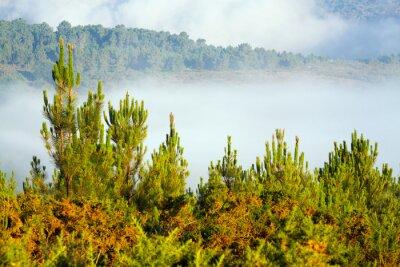 Carta da parati paesaggio nebbioso con pineta