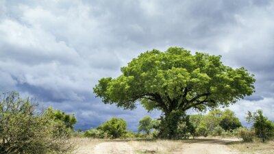 Carta da parati paesaggio parco Kruger National, Sud Africa