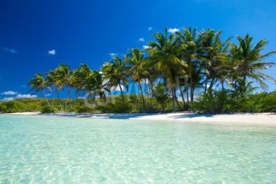Carta da parati Palm e spiaggia tropicale