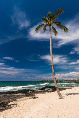 Carta da parati Palma da cocco a una spiaggia hawaiana, grande isola