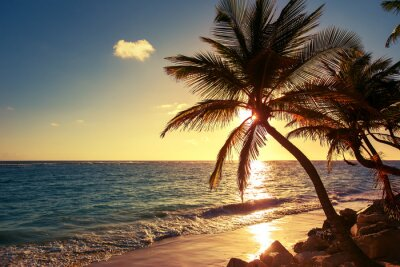 Carta da parati Palma sulla spiaggia tropicale