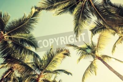 Carta da parati Palme di cocco su sfondo cielo luminoso. Stile vintage. Tonica foto con effetto filtro