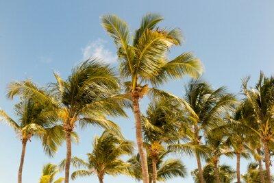 Carta da parati Palme sullo sfondo di una splendida luce del sole