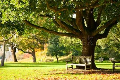Carta da parati Panchina sotto l'albero nei Royal Botanic Gardens di Londra
